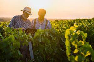 syndicat des vins du haut poitou vins rouges blancs rosés producteurs